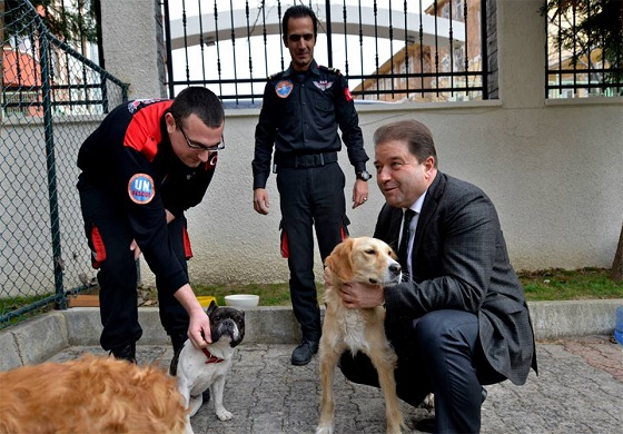 "Municipality trains stray dogs to rescue ""Hürriyet Daily News"""